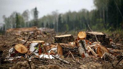 Срубил деревьев на 600 тысяч