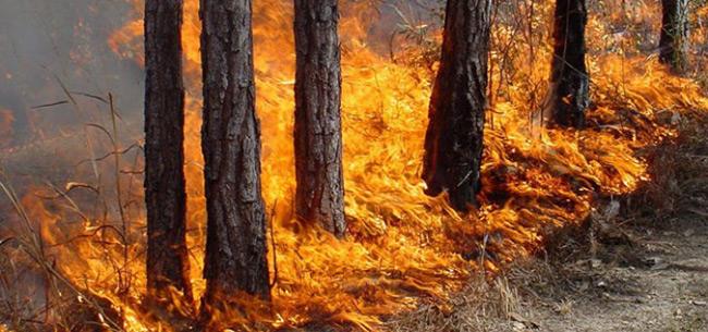 Во Владимирской области установлен пожароопасный сезон