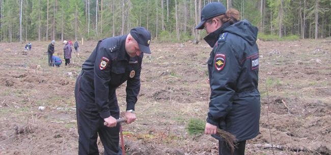 Полицейские высадили в Ковровском районе 4 тысячи саженцев сосны