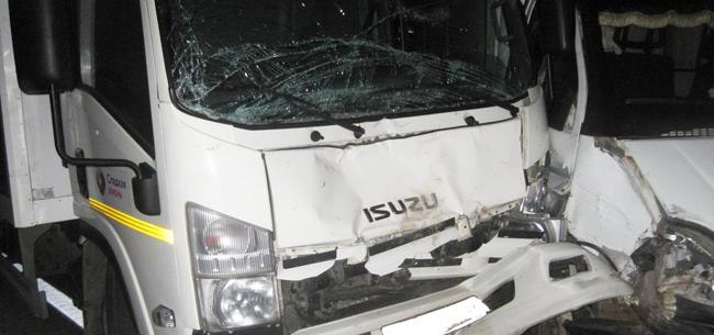 В Ковровском районе под колеса грузовых авто попали 3 лося