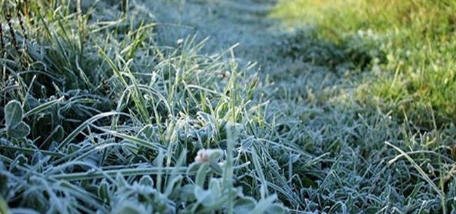 В ночь на 26 мая во Владимирской области ожидаются заморозки