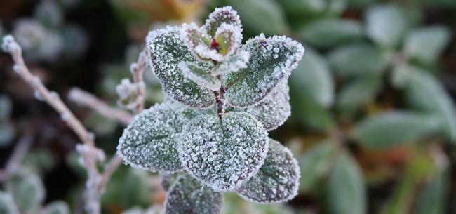 Во Владимирской области в ночь на 29 мая ожидаются заморозки на почве