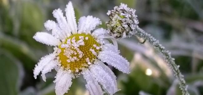 9,10 и 11 июня во Владимирской области ожидаются заморозки