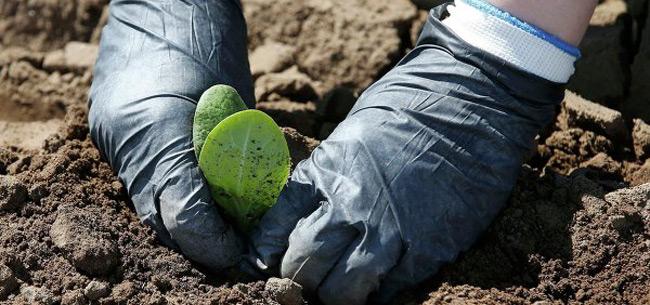 15 июня во Владимирской области ожидаются заморозки на почве
