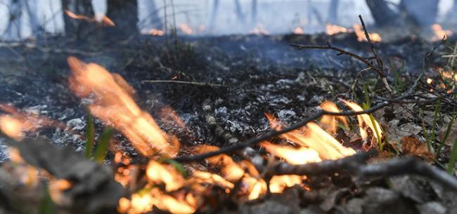 Во Владимирской области до 1 октября введен особый противопожарный режим