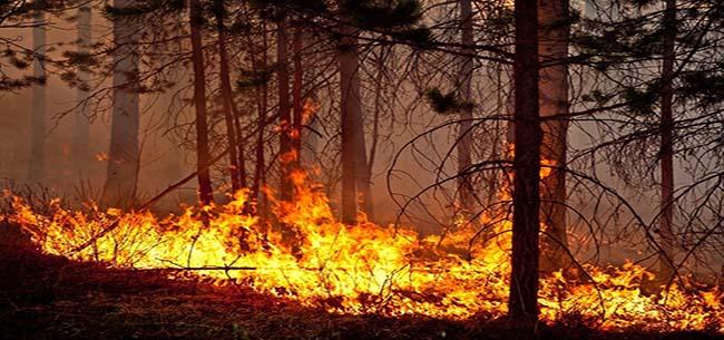 Пожароопасная обстановка сохраняется