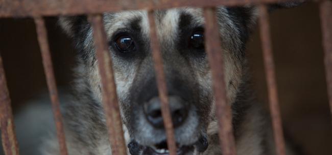 Тюремный срок за убийство собаки