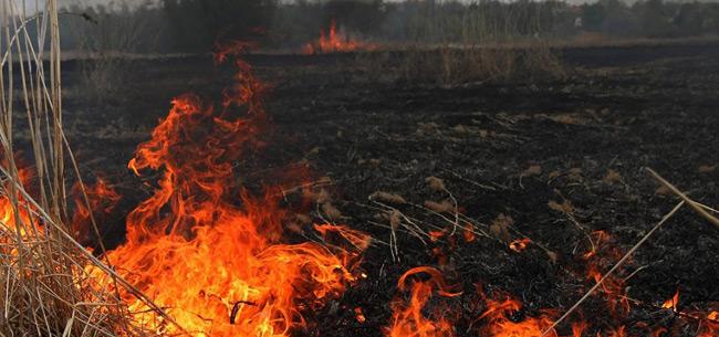 Штрафы: особый противопожарный режим