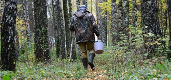 О чем следует помнить, уходя в лес?