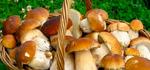 Как не отравиться грибами: правила безопасности