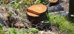 Незаконно срубил более 500 деревьев